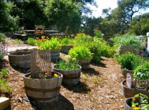 Recycled Wine Barrels Planter_1