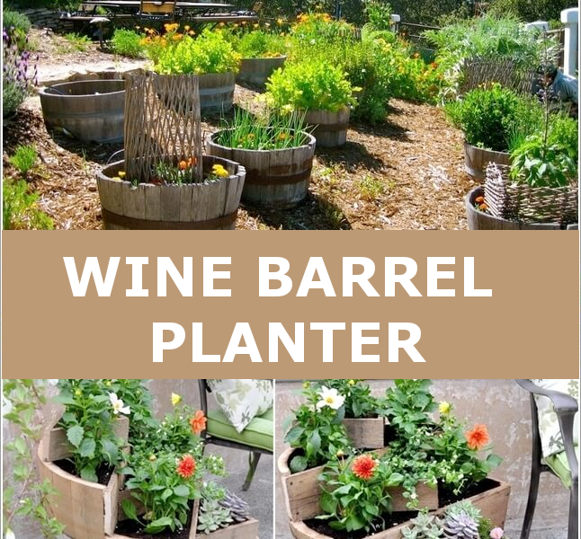 Cool Ways To Use Recycled Wine Barrels For Your Garden