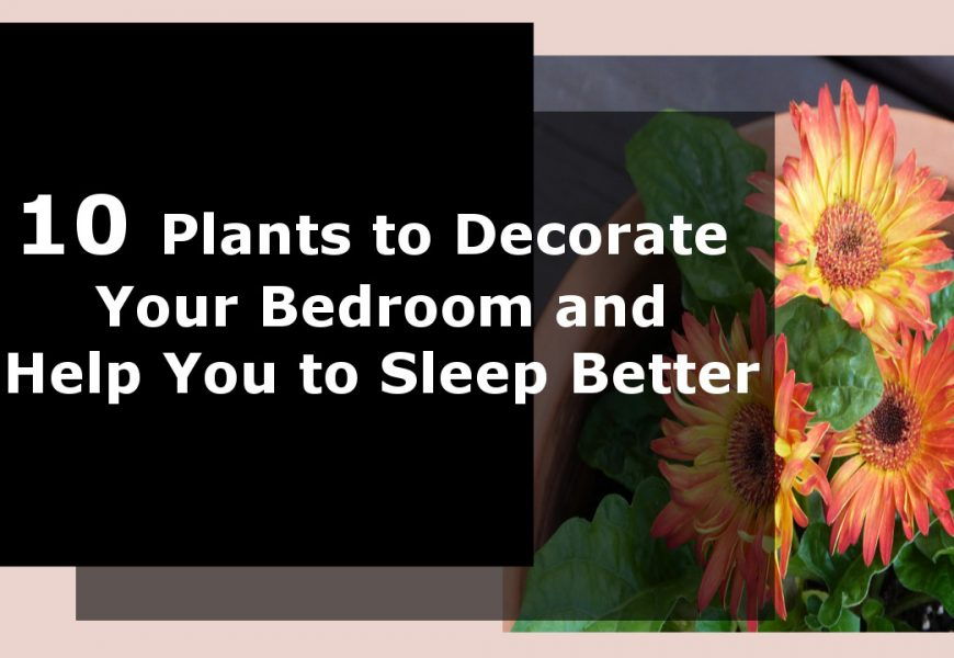 10 Plants for Bedroom Decoration and Helping You to Sleep Better Too