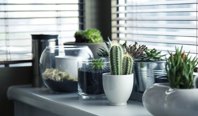 decorating tips indoor plants