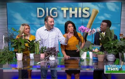 Freshen up your home decor – AJ Petitti has some colorful ideas