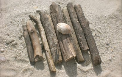 Easy Ways of Cleaning Driftwood Before Use